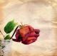 """Rose spezzate"""
